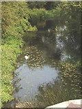 TQ1094 : River Colne from Ebury Way, Watford by David Hawgood