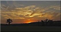 TQ3097 : Lone Tree on Farmland off Enfield Road at Sunset by Christine Matthews