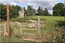 SO6437 : Parkland at Putley Court by Philip Halling