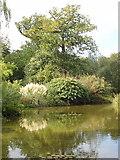 SU9185 : The Water Garden, Cliveden by David Hawgood