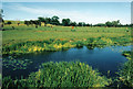 TM1578 : River Waveney and meadows between Brome and Scole by Rodney Burton