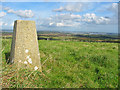 SY9482 : Trig Station, Knowle Hill, Dorset. by Clive Perrin