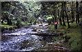 SX4870 : River Walkham, Lower Grenofen by Crispin Purdye