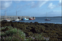 M2208 : Ballyvaghan Harbour and Pier; in the foreground sea-aster by Dr Charles Nelson