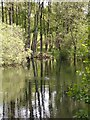 NN8322 : Pond, Laggan Hill by Callum Black