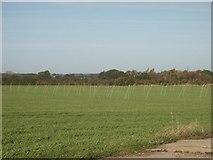 TG1408 : Marker poles (?), near Bawburgh by Katy Walters