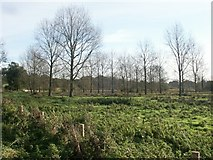 TG1409 : Grazing marshes, Easton by Katy Walters