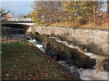 NS5574 : Gavin's Mill Fish Pass, Milngavie by Andrew McEwan