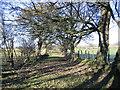NY0825 : Country lane in farmland. by John Holmes
