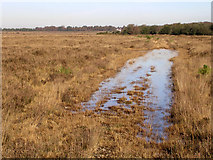 SU2115 : View towards Bur Bushes, New Forest by Jim Champion
