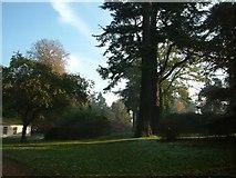 SU5598 : Nuneham Courtenay Arboretum by Colin Bates