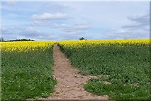 SK2441 : Footpath through early rape crop by Phil Berry