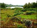 SD3683 : Bigland Hall Trout Fishery by Paul Twambley