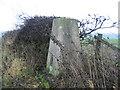 NZ3524 : Triangulation Pillar at West House Field Farm by Pangula