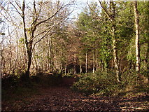 SS6611 : Woodland footpath by Dave D