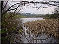NY2948 : Moorthwaite Lough by Bob Jenkins