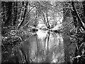 NZ5610 : River Leven Viewed Upstream by Mick Garratt