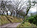NZ6007 : Coleson Banks, Battersby by Mick Garratt