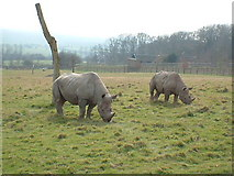 TR1034 : Port Lympne Wild Animal Park by Steve Burnham