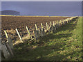 ND2573 : Farmland near Scarfskerry, Caithness by Claire Pegrum