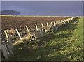 ND2573 : Farmland near Scarfskerry, Caithness by Claire Pegrum