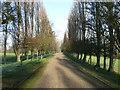 SU9074 : The avenue in Foliejon Park by Andrew Smith