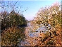 NZ3310 : River Tees by Mick Garratt