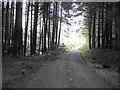 H4981 : Gortin Glens Forest Park (40) by Kenneth  Allen