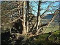 NY1422 : Tree House by Michael Graham