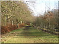 NS6258 : Forest Path on Cathkin Braes by Iain Thompson
