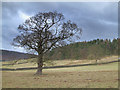 SK2672 : Near Baslow. by Mike Fowkes