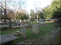 TQ2160 : Churchyard of St Martin of Tours, Epsom by Roger Miller