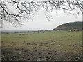 SJ5055 : Near Harthill by Dennis Turner