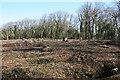 ST3162 : Weston-super-Mare: Worlebury hillfort by Martin Bodman