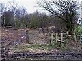 SE1987 : Derelict woodland, near Marriforth Farm by Oliver Dixon