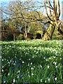 TQ5891 : Walled Garden, Warley Place by Glyn Baker