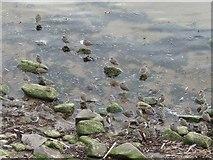 NU0052 : Redshank roost by Richard Webb
