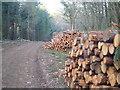 SX8382 : Logs in Big Covert by Derek Harper