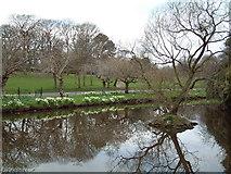 SJ3787 : Sefton Park by David Squire