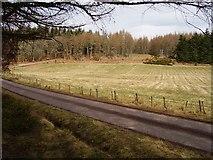 NH6271 : Dalreoch Wood by Richard Webb