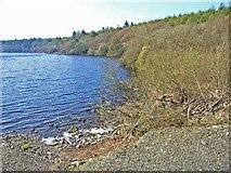 NX2355 : Whitefield Loch, near Glenluce by Oliver Dixon