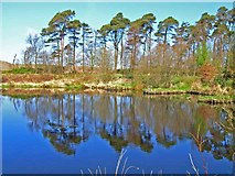 NX2463 : Fishing lake at Torwood House Country Hotel by Oliver Dixon