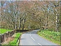 NX3161 : B733 through the woods near Kirkcowan by Oliver Dixon