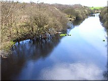 NX3462 : River Bladnoch from the A75 by Oliver Dixon