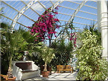 SJ3787 : Interior of  Sefton Park Palm House by Sue Adair