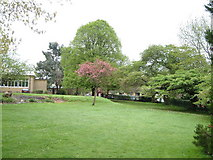 ST8707 : Grounds of Blandford School at Milldown by Derek Harper