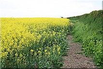 SX3358 : A Field of Oilseed Rape by Tony Atkin