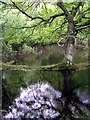 SU2904 : Spring flooding alongside Ober Water, New Forest by Jim Champion