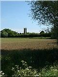 TF5315 : Terrington St John church by David Prestidge