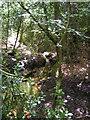 TQ4033 : Woodland Stream, Ashdown Forest by N Chadwick